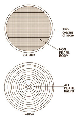 Diagram of Natural Pearl Showing Nacre Thickness